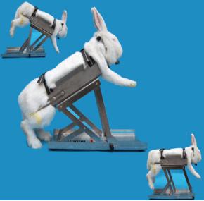 不锈钢兔固定架产品图片