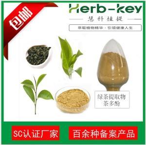 绿茶提取物供应商 20年生产厂家 现货热销