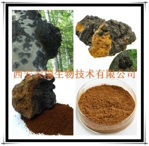 白桦茸多糖10%-50% 白桦茸提取物厂家