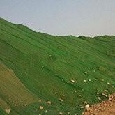 绿色盖土网厂家A廊坊绿色盖土网厂家A绿色盖土网厂家批发