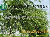 水杨甙50%