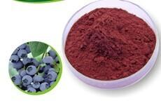 蓝莓粉水溶性厂家供应
