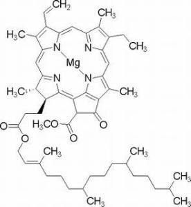 叶绿素A479-61-8分析标准品,HPLC≥98%